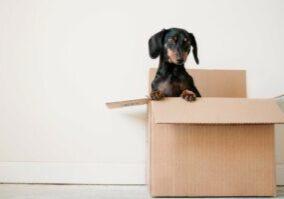 Lieve hond in een doos